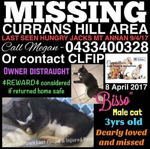 Missing Charcoal and White Cat Campbelltown Campbelltown Area Preview
