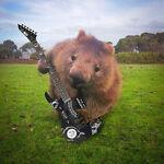 Running Wombat