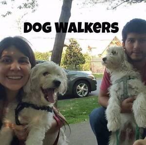 Pet Walkers Bondi Junction Eastern Suburbs Preview