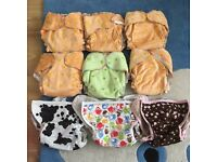 Daisybirds Nappies & Blueberry Wraps Bundle