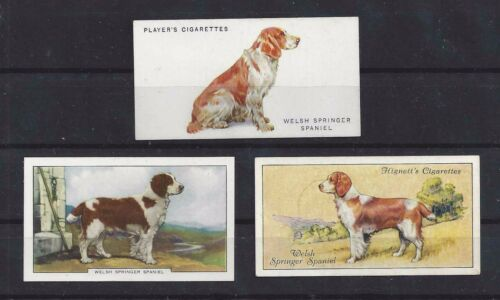Rare 1931 - 1938 UK Dog Art Cigarette Card Collection x 3 WELSH SPRINGER SPANIEL