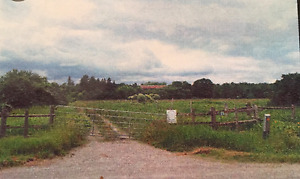 FARM PROPERTY FOR SALE IN THE TOWN OF ERIN