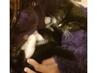 Missing much loved kitten