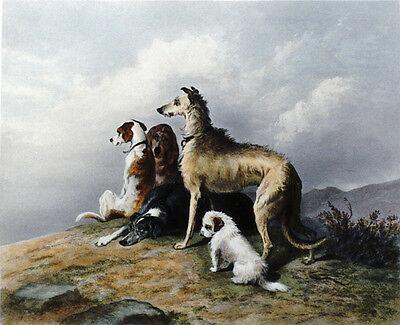 DEERHOUND SCOTTISH DANDIE DINMONT TERRIER GREYHOUND DOG ART ENGRAVING - Landseer
