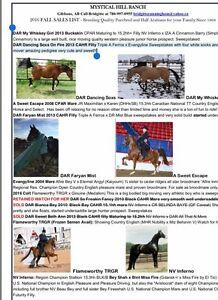 Registered Arabians. Excellent bloodlines. $2000 and up.