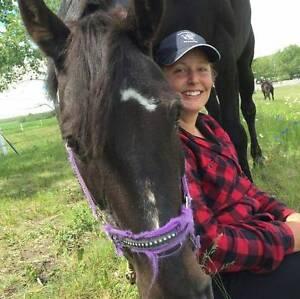 Horse Exerciser / Able to Show Maroochydore Maroochydore Area Preview
