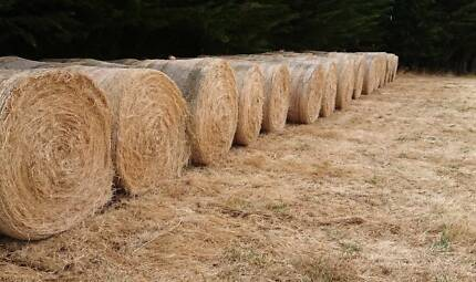 HAY FOR SALE Yolla Waratah Area Preview