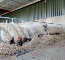 Stockmaster 2.5mtr Sheep Feeding Barrier