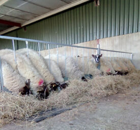 Stockmaster 2.5mtr Sheep Feeding Barrier