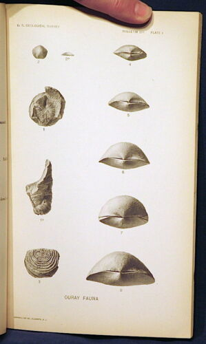 USGS DEVONIAN FOSSILS of the OURAY LIMESTONE COLORADO Beautiful Plates! 1909