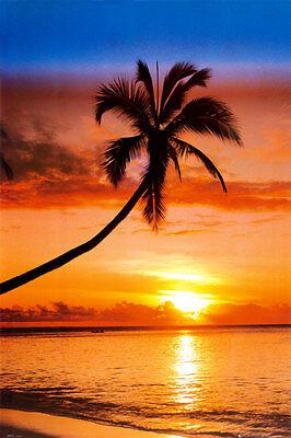 Sunset Palm Poster Print, 24x36