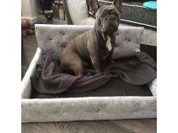 dog cat pet crushed velvet beds