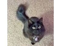 Cat Missing from Tadcaster