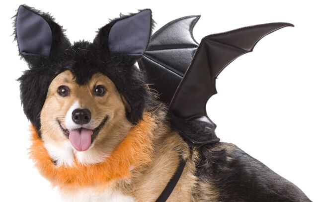 BAT DOG COSTUME - ANIMAL PLANET - EXTRA SMALL