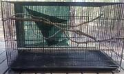 Bird Cages for sale Gin Gin Bundaberg Surrounds Preview