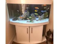 WHITE 4ft 450LTR BOW FRONTED TANK WITH COMPLETE SET UP , FISH & ACCESSORIES INCLUDED