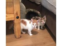 Gorgeous kittens ready now