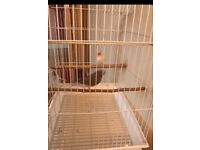 Zebra finches and cage