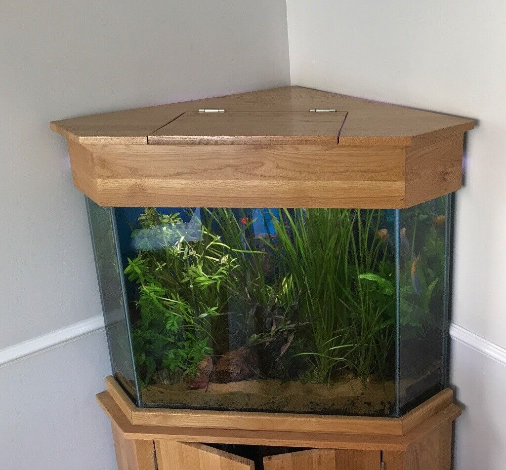 Corner unit fish tank on oak cabinet and oak top complete for Corner fish tank for sale