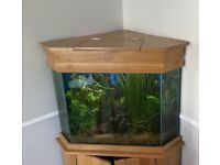Corner unit fish tank on oak cabinet and oak top, complete with pump and filter etc.