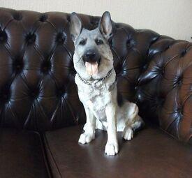LARGE COUNTRY ARTIST GERMAN SHEPHERD DOG FIGURE