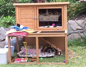 Guinea pig hutch and guinea pigs Toormina Coffs Harbour City Preview