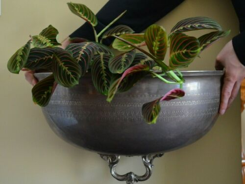 """Very Stylish Antique English Silver Plate """"Meat Dome Half"""" Wall Flower Planter"""