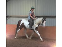 Cob/Arab 14hh Pony for share/part loan