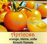 ♥ Tomate Apricosa,zuckersüß,orange Alte Sorte,Samen,Nasch Garten Eimsbüttel - Hamburg Schnelsen Vorschau