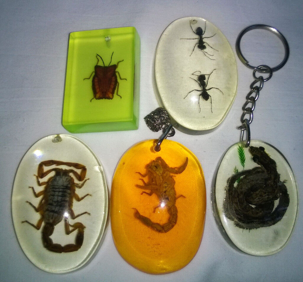 job lot of taxidermy creatures in resin