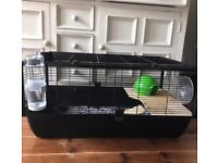 two female rats with good cage