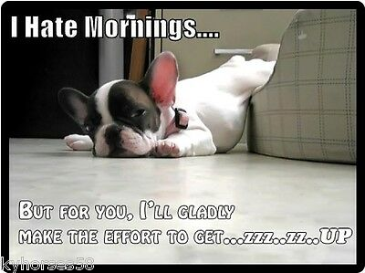 Funny Dog Humor French Bulldog Mornings Refrigerator Magnet