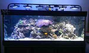 Reef Marine Aquarium 7ft x 2.5ft x 2.5ft – worth $45,000 Croydon Park Canterbury Area Preview