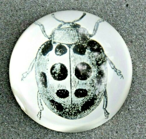 Vintage Glass Paperweight Collectible Art Beetle Lady Bug Insect Unique Rare