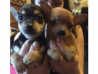 Pups looking for a forever loving home together