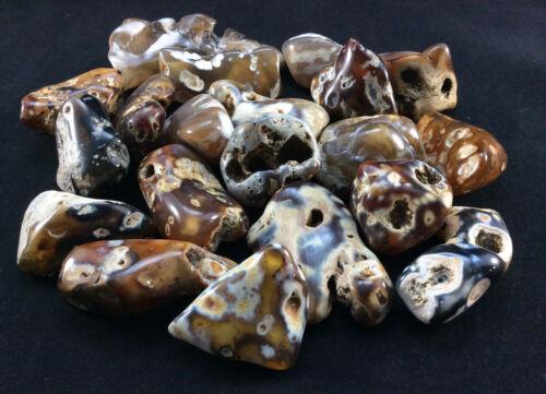Medium Polished Agatized Fossil Coral-1512M, Metaphysical Crystal Balance Tumble