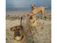 Looking for my 2 dogs