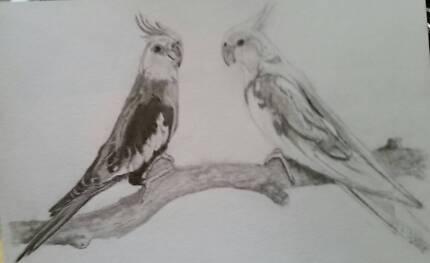 Custom Pet Drawings