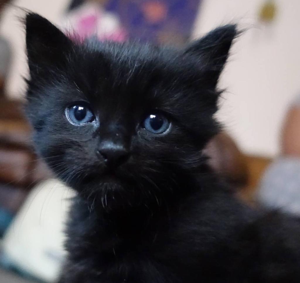 Adorbale kitten