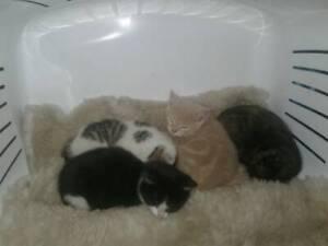 Kittens needing a home