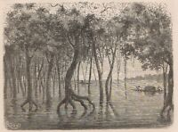 C1265 Brazil - Chasse D'une Pirogue Dans Le Gapo - Xilografia - 1867 Engraving -  - ebay.it