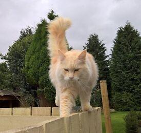 Missing cat Perth