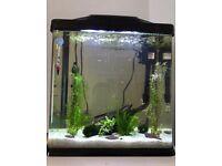 Tropical Fish tank aquarium full setup*HomeDelivery*