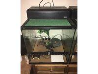 Two female geckos with vivarium and heat matt for sale