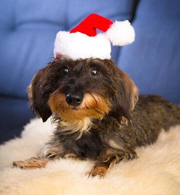 Mini-Nikolausmütze für Hunde Katzen Hund Weihnachtsmütze Weihnachten 123871913