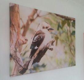 Kookaburra sits on the old gum tree - Unique canvas photo art print (£120)