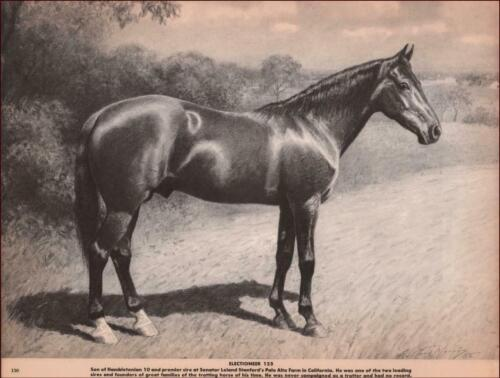 ELECTIONEER 125, Hambletonian 10, Son & Leading Sire Trotting Horses, G F Morris