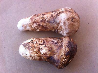 Wild matsutake whole freeze dried 6 Ounce from Himalayas Mushroom & Truffles
