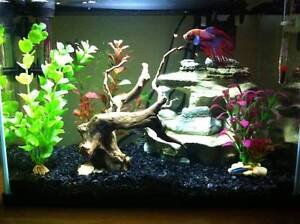 Blue Planet AA370LGC fish tank (20L) with loads of accessories. Endeavour Hills Casey Area Preview