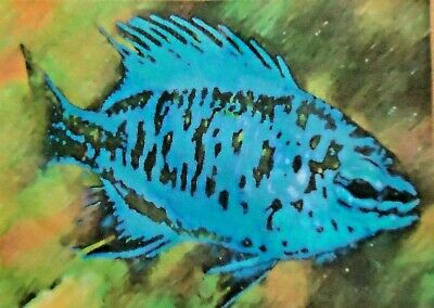 ACEO ATC Sapphire Damsel Fish Hand-Rendered Wet Watercolor